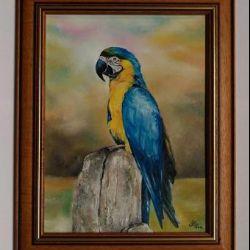 Papagáj portré